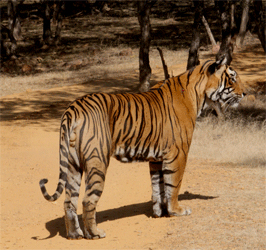 Rajasthan- Culture & Wildlife Cycle Tour